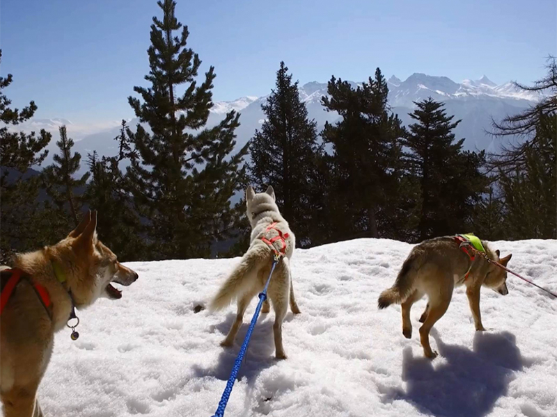Every Monday - Husky hiking - Free